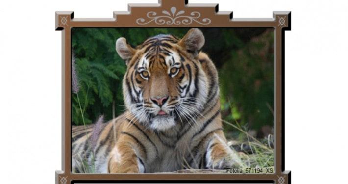 Tiger im Holzrahmen